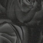 Роза-черная-TM-437