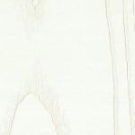 Ясень-патина-38181
