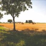 campagna pianura padana, panorama 360°