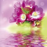 bunch of purple tulips on colors background
