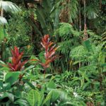 Rainforest, North Queensland, Australia